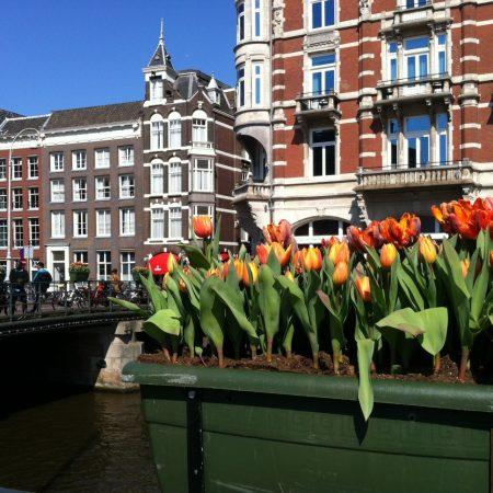 Фестиваль цветов в Голландии 2018