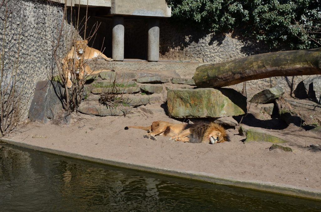 Artis Royal Zoo, зоопарк в Амстердаме