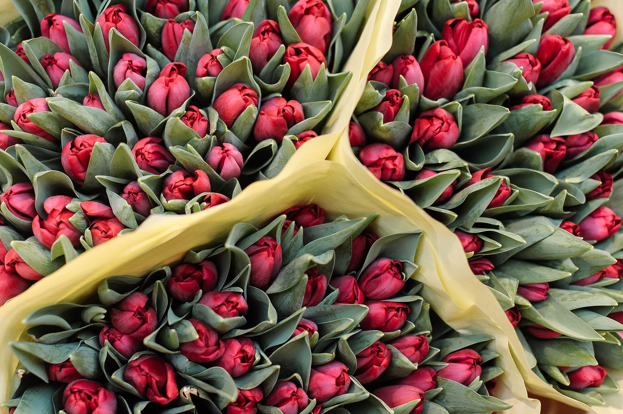 Сколько стоят тюльпаны на Цветочном рынке Амстердама?