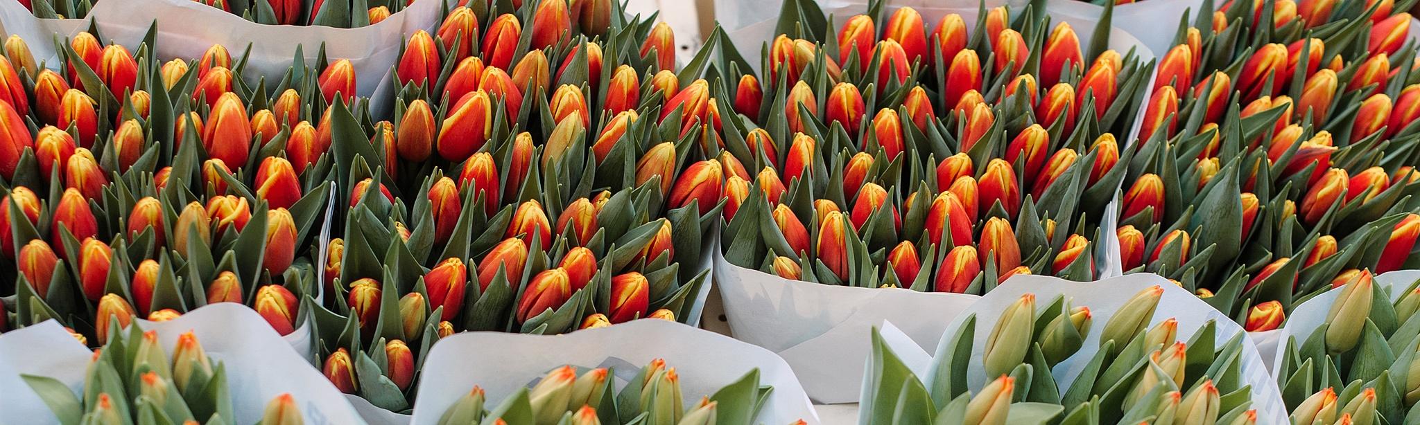 Сколько стоят цветы в Амстердаме?