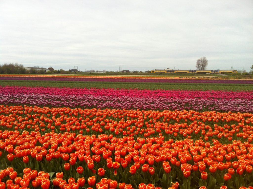 Как добраться из Амстердама в Кекенхоф?