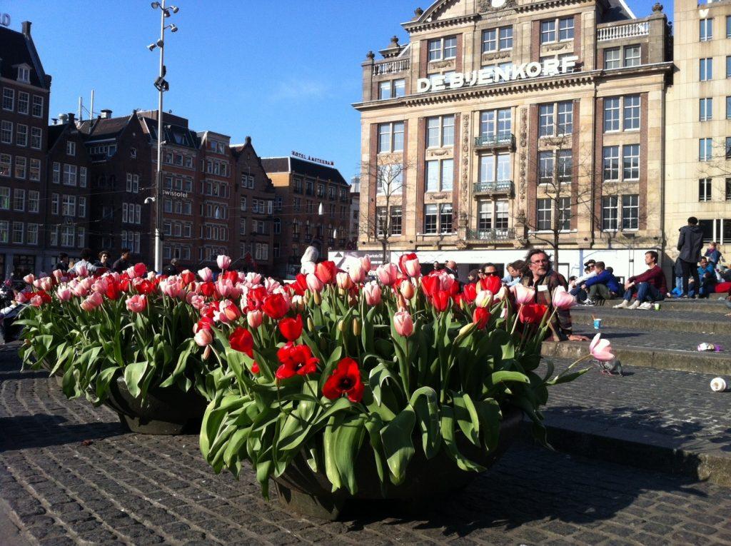 Фестиваль тюльпанов в Амстердаме. Фестиваль цветов.