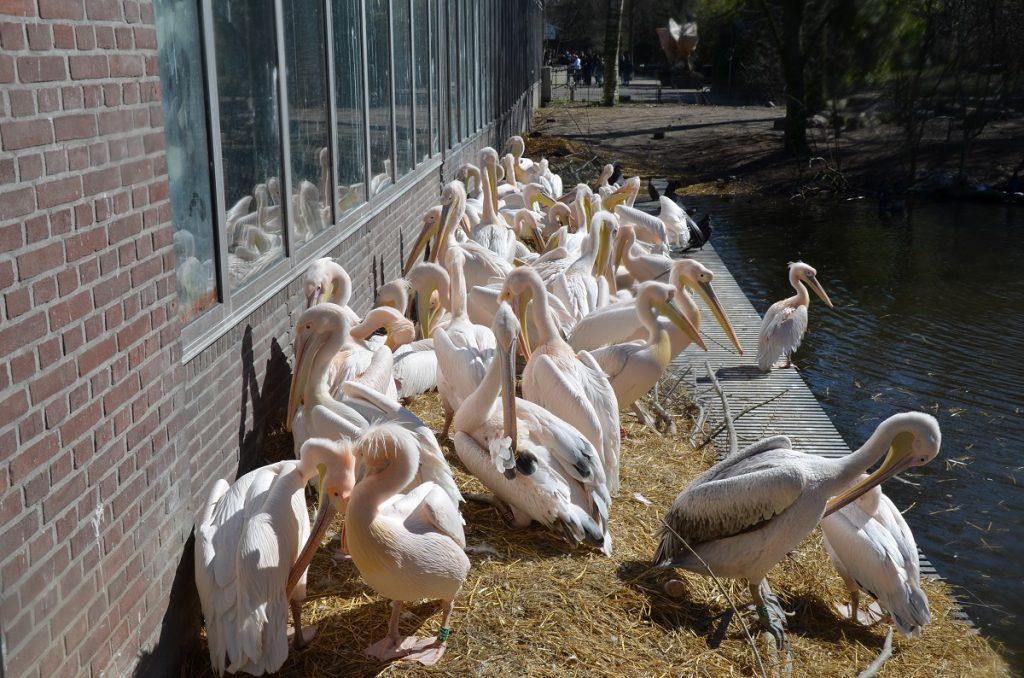 Артис, зоопарк в Амстердаме