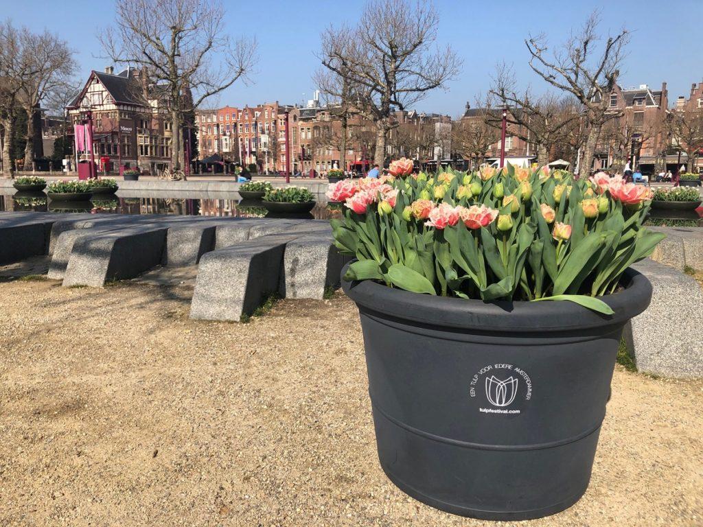 Фестиваль тюльпанов в Амстердаме